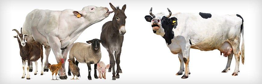 Farm Animal Supplements